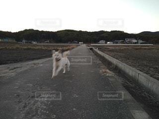 犬,空,動物,屋外,自由,散歩,走る,ワープ