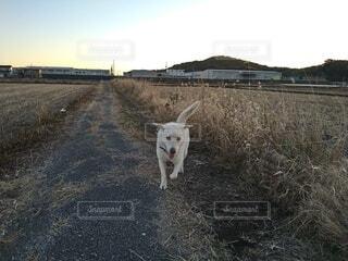 犬,空,動物,屋外,散歩,草