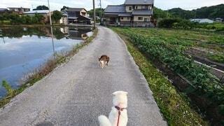犬,猫,動物,屋外,散歩,道路,草,地面,にらみ合い,遭遇