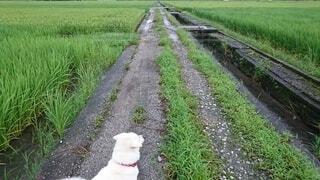 犬,動物,屋外,散歩,草,見つめる,遠く