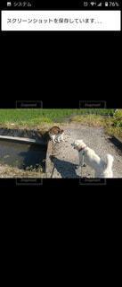 犬,猫,動物,散歩,田畑,遭遇,昼下り