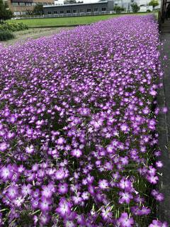 花,屋外,緑,紫,草木,ガーデン,フローラ
