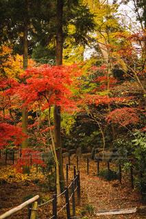 自然,風景,秋,紅葉,屋外,散歩,葉,樹木,落葉,カエデ