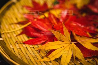 自然,秋,紅葉,赤,黄色,葉,もみじ,カエデ