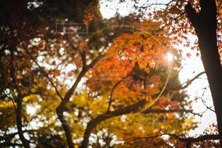 秋,紅葉,屋外,樹木,リング,虹色,落葉,草木,輪