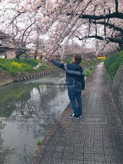 風景,花,屋外,湖,水面,樹木,人物,道,人,草木