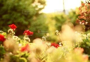 雨上がりの花壇の写真・画像素材[4212877]