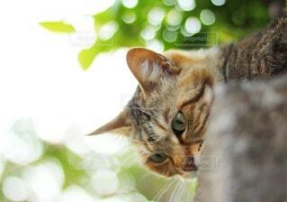 猫の散歩の写真・画像素材[4212884]