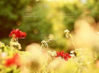 雨上がりの花壇の写真・画像素材[4212892]