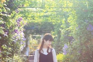 植物園の写真・画像素材[4212910]