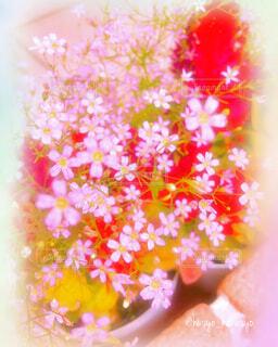 花,春,庭,ピンク,かわいい,きれい,ガーデニング,家,美しい,玄関,家庭菜園,ホーム,家庭,ミックス,加工,ピンク色の花,草木,自宅,癒される,春の花,花々,ガーデン,庭先,ステイホーム