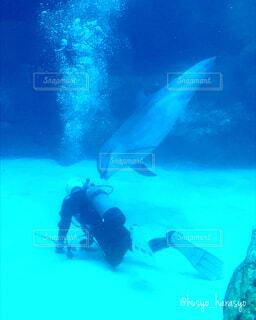 魚,屋外,イルカ,かわいい,きれい,綺麗,水族館,水面,葉,泳ぐ,仲良し,美しい,水中,可愛い,ダイビング,海水,水槽,哺乳類,掃除,ダイバー,海獣,海豚,潜る,いるか,話しかける,酸素ボンベ,以心伝心,職員,スキューバ ダイビング,ダイビング用品,水中ダイビング,ダイブ マスター,水中スポーツ,アクアノート,水槽掃除,水槽管理,エアーボンベ
