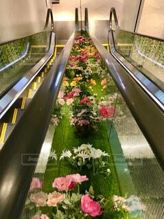 花,屋内,屋外,かわいい,きれい,美しい,樹木,エスカレーター,隙間,可愛い,たくさん,見下ろす,すきま,草木,癒される,出入口,花々,ガーデン,長い,上がる,百貨店,下りる,便利,順路,インスタ映え,挟まれて,気分が上がる,ガーデンフェスタ,テンションが上がる