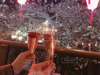 桜,お酒,赤,花見,夜桜,お花見,人物,人,ビール,カクテル,ドリンク,さくら,ソフトド リンク