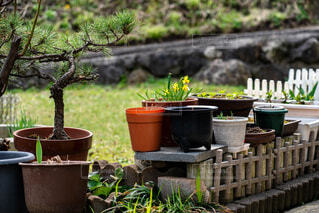 これから芽吹くであろう庭先の鉢植えの写真・画像素材[4371015]
