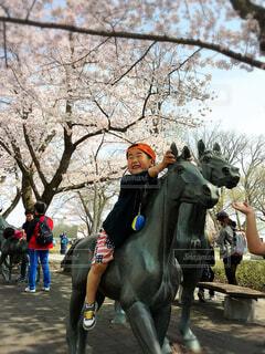 桜の写真・画像素材[4288248]