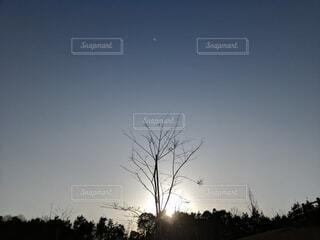 自然,空,屋外,樹木,月