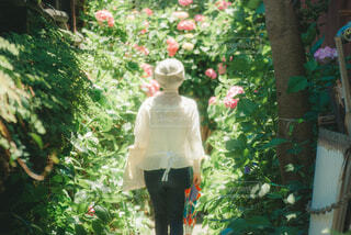 紫陽花の世界に迷い込むの写真・画像素材[4559620]
