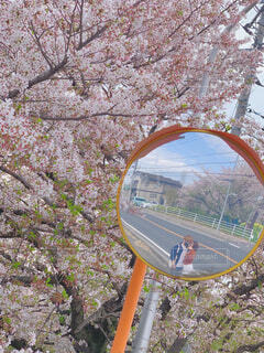 カーブミラーに映る私たちと桜の写真・画像素材[4306764]