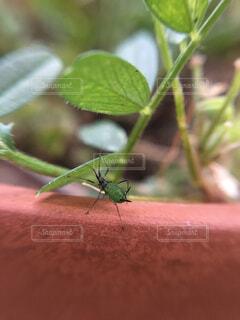 庭の植木鉢の上を歩く緑色のアブラムシのクローズアップの写真・画像素材[4362459]