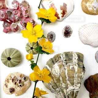 貝殻とヤマブキの花の写真・画像素材[4362483]