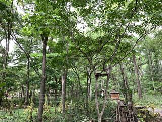 森林の写真・画像素材[4223158]
