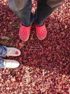 紅葉の絨毯の写真・画像素材[4303082]