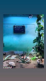 水族館,観葉植物,草木,テキスト