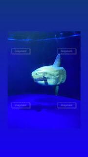 動物,水族館,葉,画面,モニター,サメ,海獣
