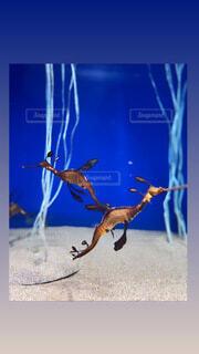 動物,魚,水族館,葉,海洋無脊椎動物