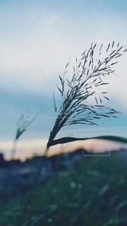 自然,空,屋外,草木