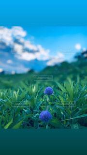 自然,空,花,草木