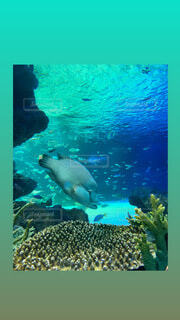 動物,魚,水族館,水面,葉,泳ぐ,水中,画面,ダイビング,海獣,スキューバ ダイビング,シュノーケ リング
