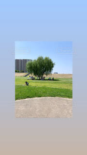 空,屋外,草,樹木