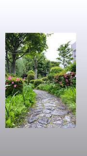 花,樹木,観葉植物,植物園,ガーデン,低木