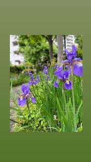 花,春,草木,ガーデン,フローラ