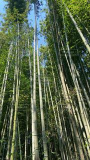 空,森林,屋外,樹木,竹,草木
