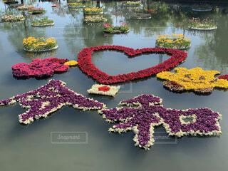 水の池に浮かぶ花のアートの写真・画像素材[4224194]