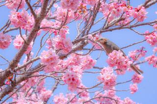 お花見の写真・画像素材[4272265]
