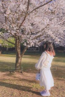 桜の写真・画像素材[4277719]