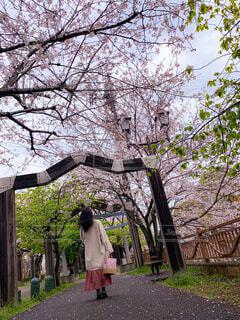 桜並木の写真・画像素材[4287845]