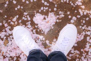 桜の写真・画像素材[4296670]