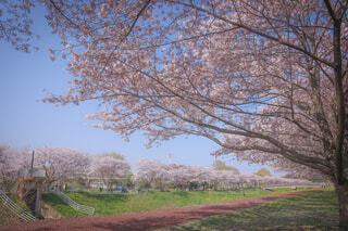 春の写真・画像素材[4296705]