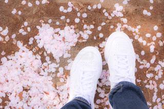 桜の写真・画像素材[4340261]