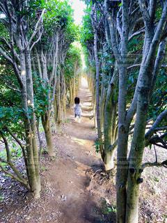 神奈川県にある東高根森林公園にある子供が好きそうな遊歩道の写真・画像素材[4230802]