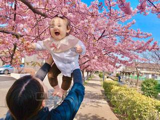 桜散策を喜ぶ桜の髪留めを付けた赤ちゃんの写真・画像素材[4271227]