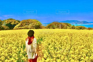 福岡県の菜の花畑の写真・画像素材[4297152]