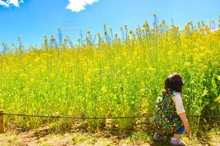 国営ひたち海浜公園の菜の花エリアで遊ぶ子供の写真・画像素材[4348602]