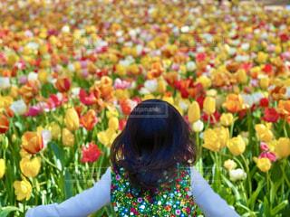 チューリップ畑を前に興奮する娘の写真・画像素材[4627425]