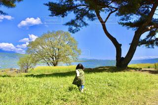 満開のネモフィラに向かう子供の写真・画像素材[4627427]